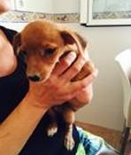 Nina adoptée 12.09.2015