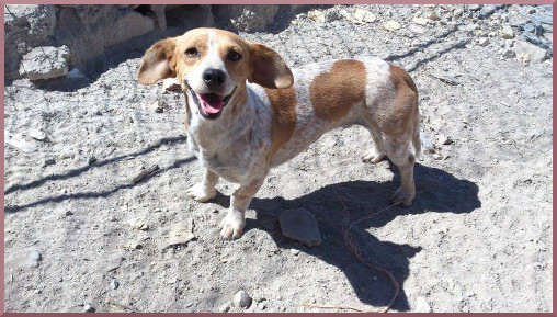 Agnes-Canelle adoptée 28.11.2015
