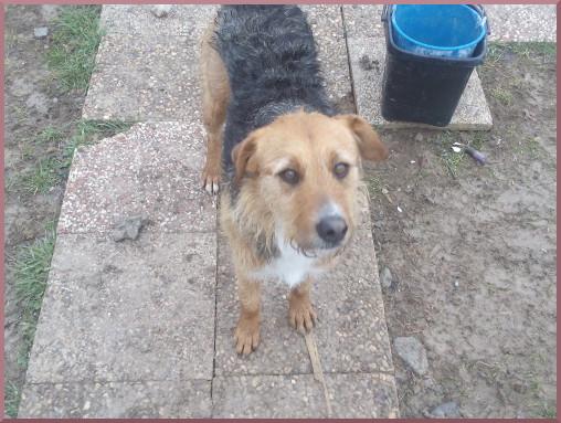Zora adoptée le 16.02.2016