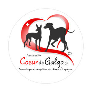 sticker-coeur-de-galgo