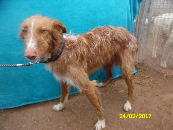 Ashki adopté 22.07.17