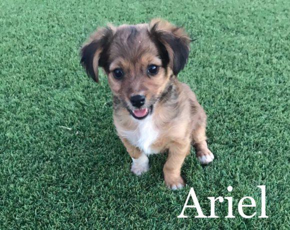 Ariel adoptée
