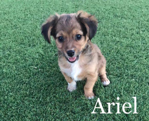 Ariel adoptée 30.09.17