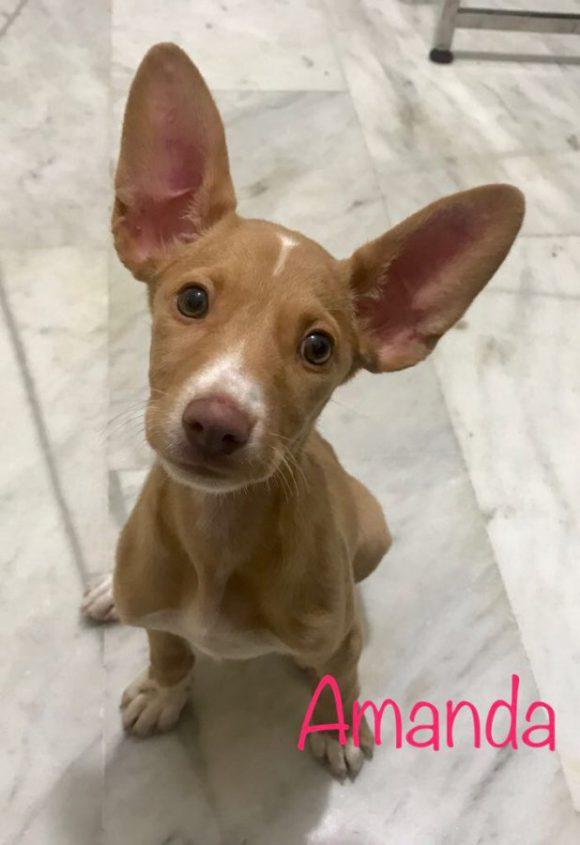 Amanda adoptée 02.12.17
