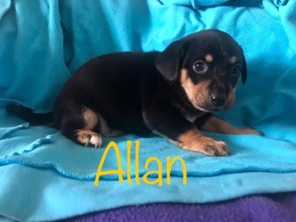 Allan adopté 16.02.18