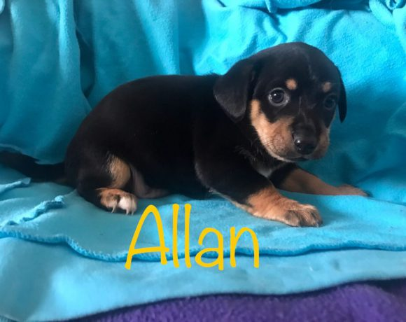 Allan réservé