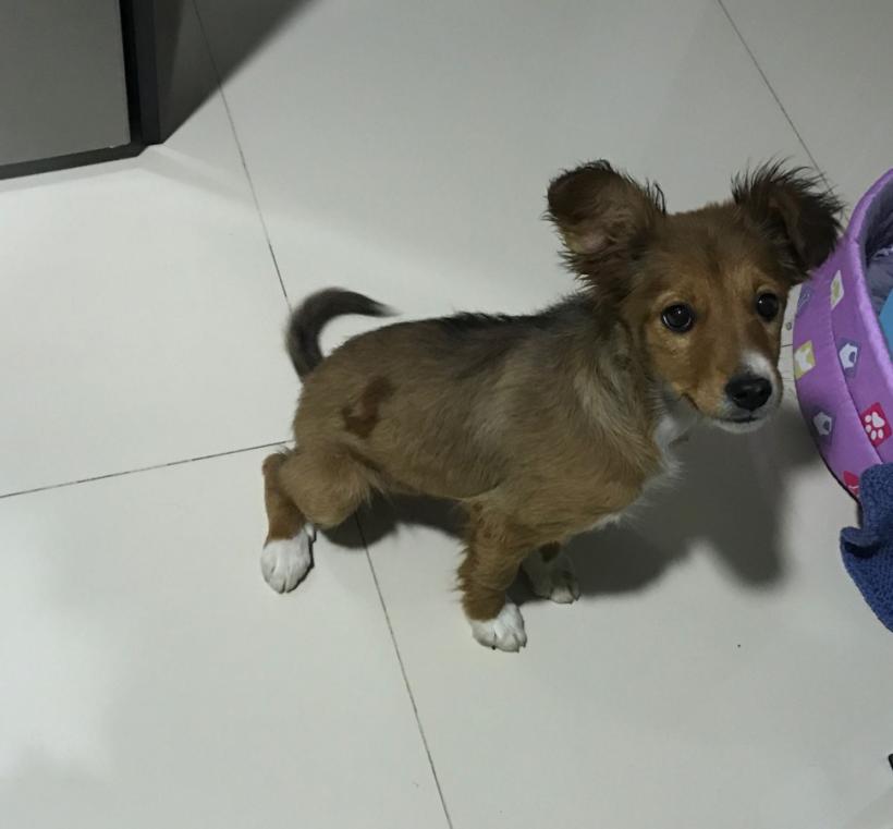 Frida adoptée 07.07.2018