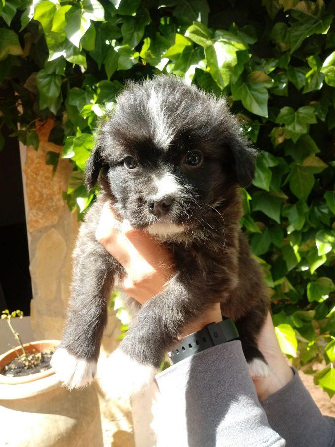 Fibi-Fiby adoptée 22.09.18