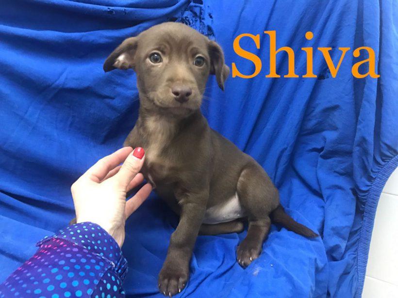 Shiva adoptée 08.09.18