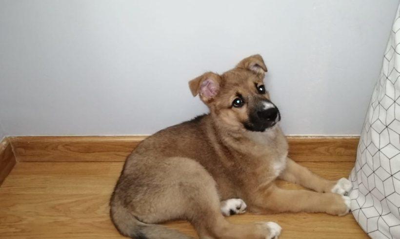Roxy adoptée 15.02.2020