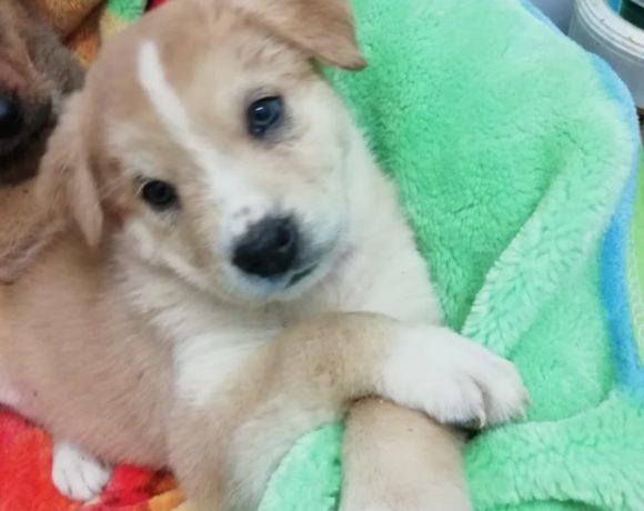 Abby adoptée 15.02.2020