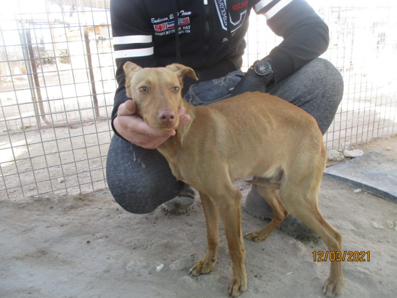 Benji adopté 17.07.21