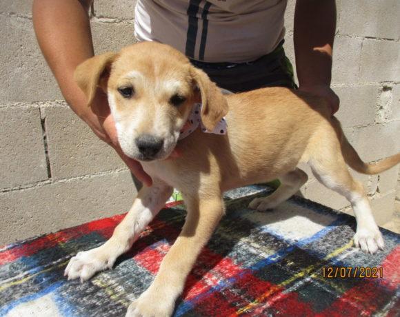 Leila-Mija adoptée