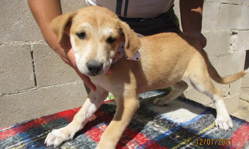 Leila-Mija adoptée 9.10.21